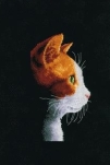 DMC Kitten 20 x 26 cm telpakket